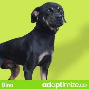 Dino Chihuahua Dog