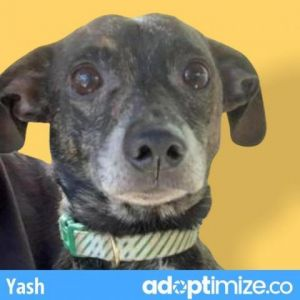 Yash is a little nervous with people but will warm up with time and patience