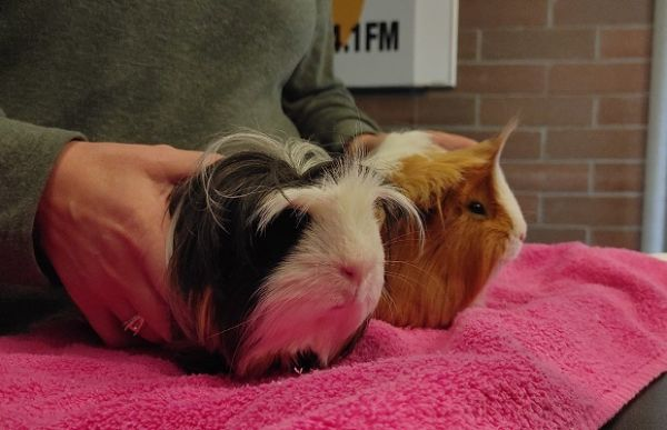 Wilbur & Oscar
