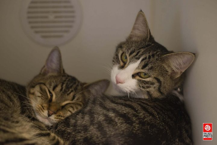 Quizzy & Sweetpea 1