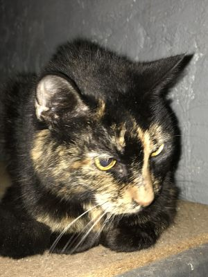 This sweet old gal is looking for a quiet and loving home for her twilight years