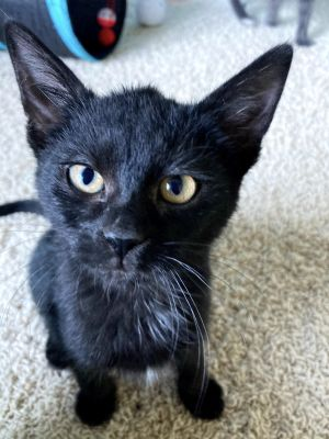 Cosmo - Pending Adoption