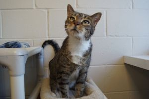 Mrs Who came to our shelter when her previous owners could no longer care for her She is about 8