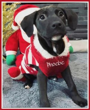 You can fill out an adoption application online on our official websitePhoebe