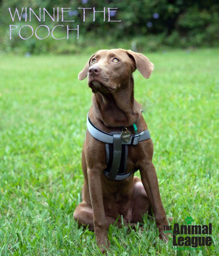 Winnie the Pooch 1