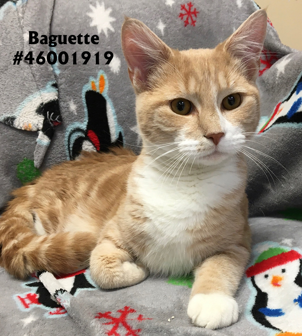 Baguette detail page