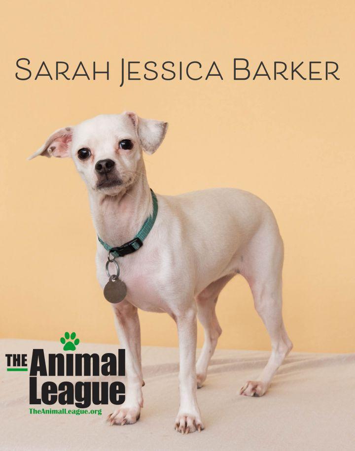 Sarah Jessica Barker 1