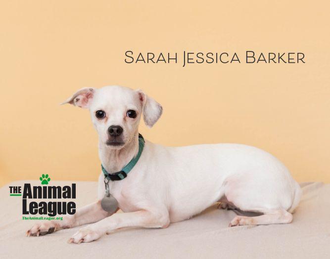 Sarah Jessica Barker