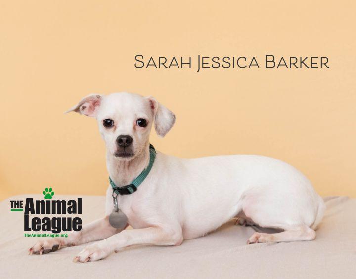 Sarah Jessica Barker 2
