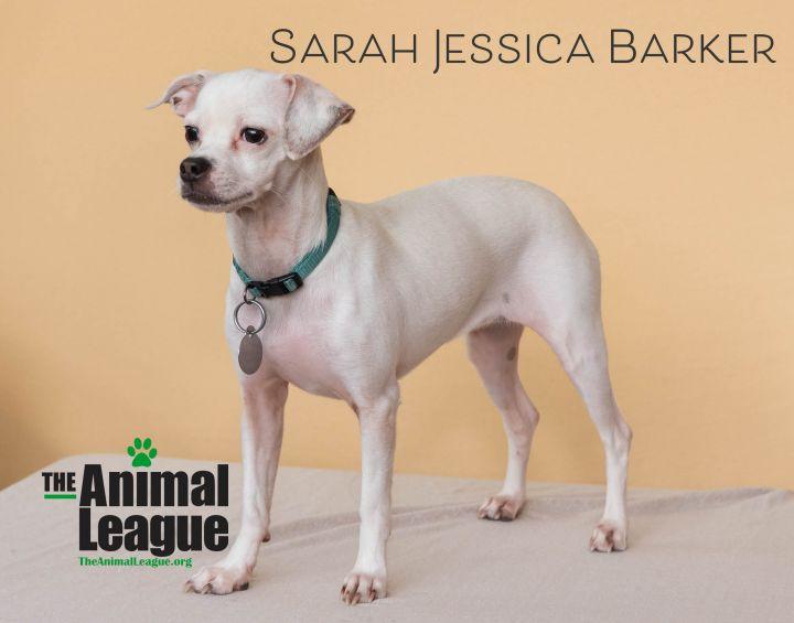 Sarah Jessica Barker 3