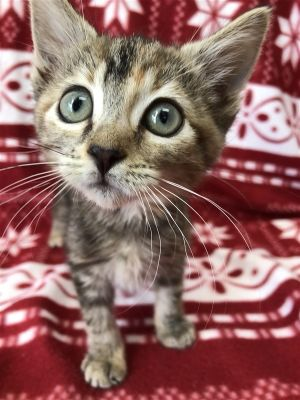 Pita is the name Pee-ta and getting adopted is my game Come on down and meet this beauty Pita en