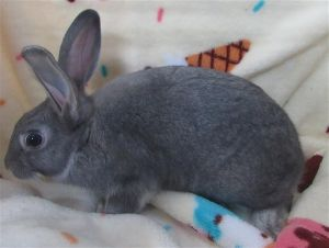 Primary Color Grey Weight 285lbs Age 0yrs 3mths 4wks Animal has been Spayed