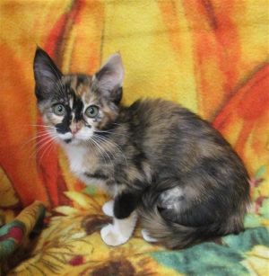 Meet Camo This cutie loves to love and give love This young gal enjoys playing with her toys maki