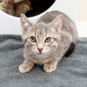 I just arrived at Animal Haven Please check back soon for more info about me