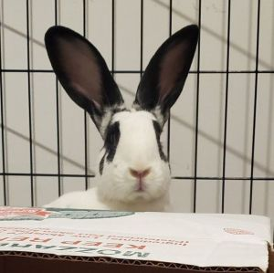 Meet Giselle and Francois This duo is very sweet and friendly If you wanted a dog in a bunny suit