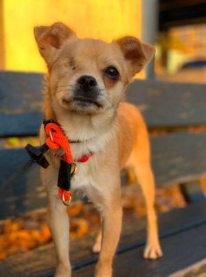 We kindly ask that you do not ask questions about this dog through Petfinder