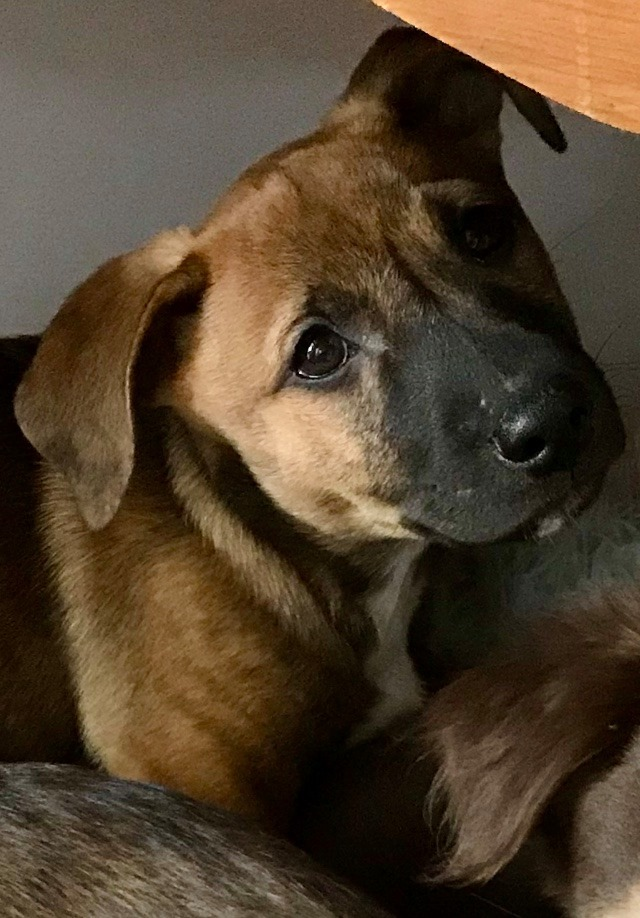 Jude, an adopted Mixed Breed in Rochester, NY