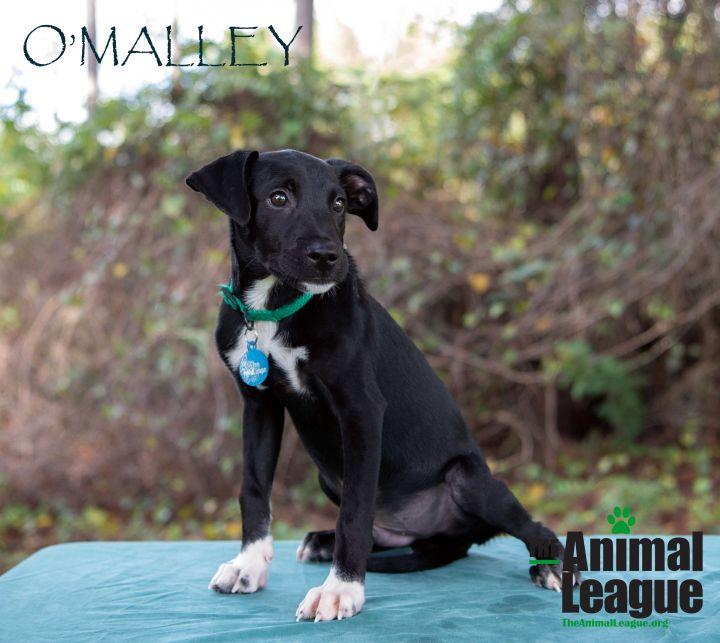 O'Malley 1