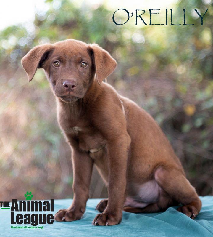 O'Reilly 1