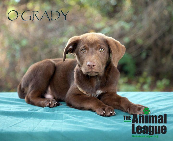 O'Grady 1