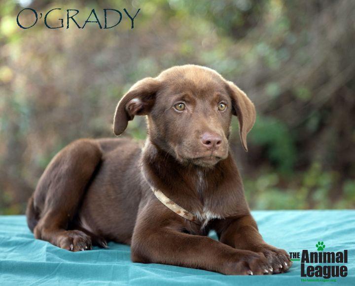 O'Grady 2