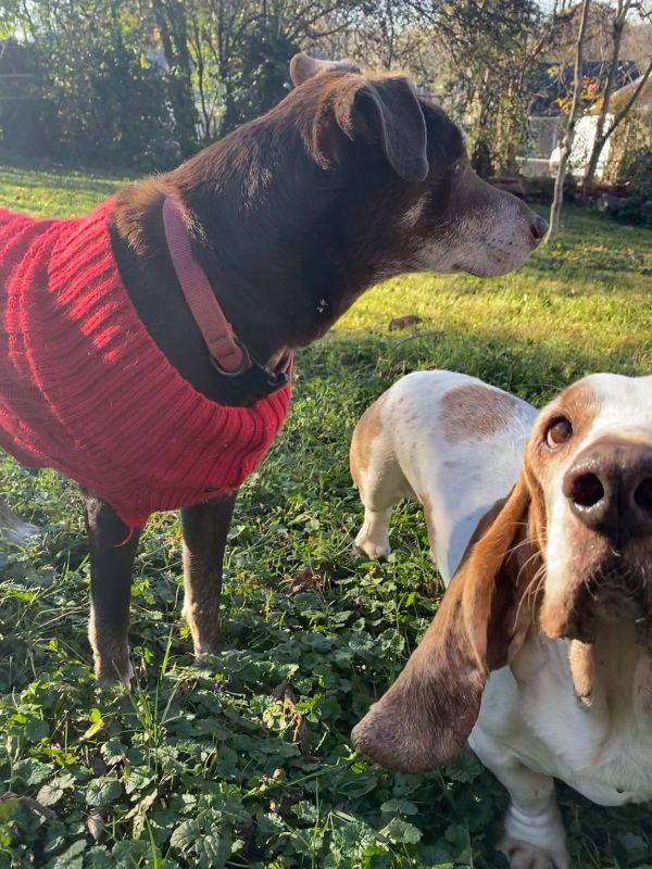 Duke and Romeo