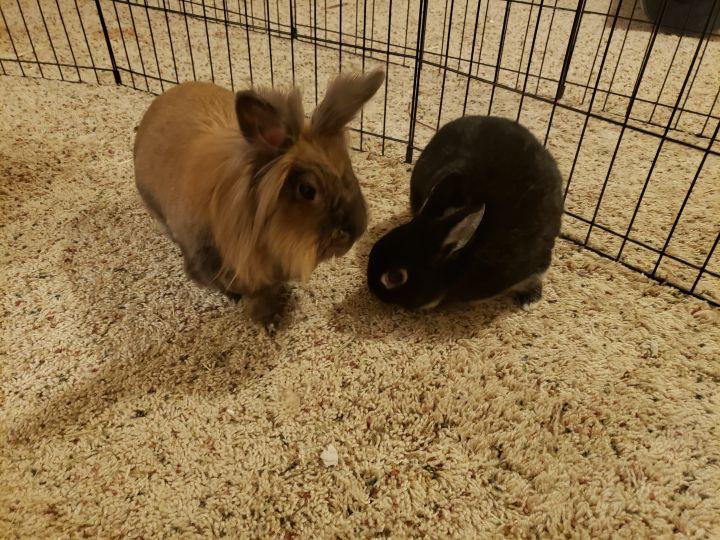 Winnie & Ginger 1