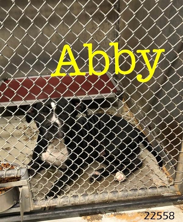 Abby 1