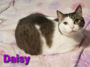 Daisy is a 5 year old girl looking for her new home She would prefer a quieter household and typica