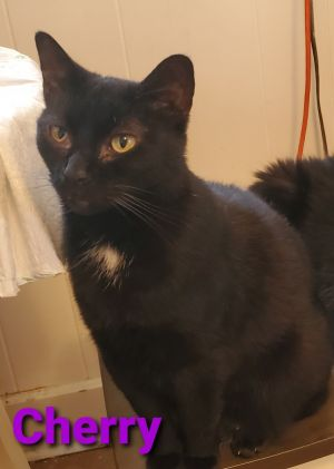 Cherry is a 7 year old female She is spayed and vaccinated She has a good personality and would be