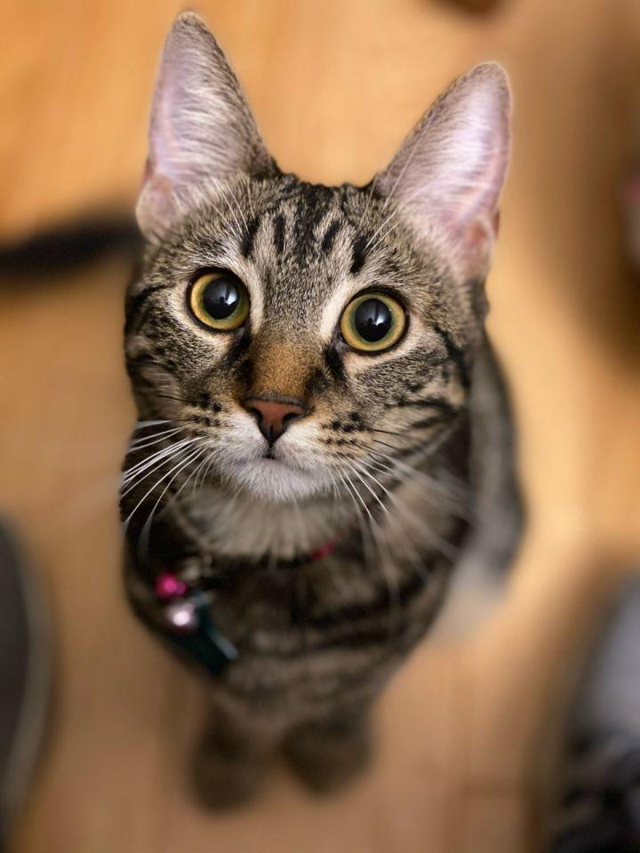 Piper Kitty 1