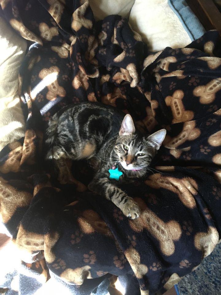 Piper Kitty 3