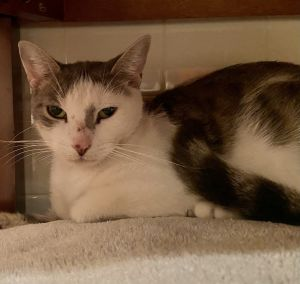 Pearl is in need of a foster home with someone ready to work on socializing her