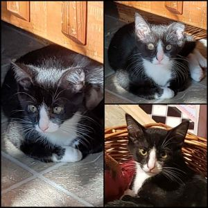 Just 4 months old this baby boy is ready for his forever home Apply at wwwanimalnationorgadopti
