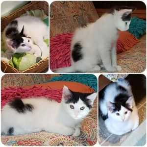 Paradise is a 4 month old handsome baby boy with medium length hair He is now ready for a forever