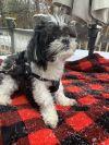 Simon( foster to adopt bonded pair)
