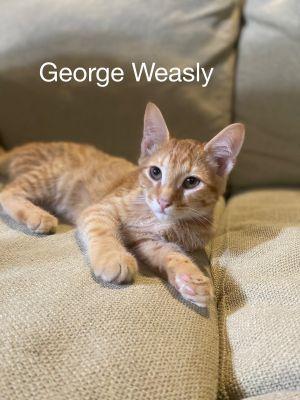 George Wealsy