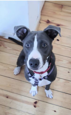 This handsome boy is active and playful He gets along great with other dogs and loves a good run A