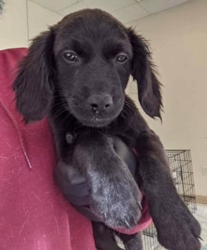You can fill out an adoption application online on our official website Lucy Loo AL is a female S