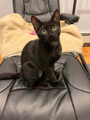 Baby Salem is just shy of 4 months old and ready for a forever home Apply at wwwanimalnationorga