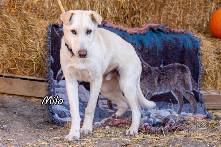 Milo 3