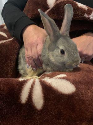 Newman Bunny Rabbit Rabbit