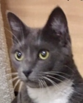 Autumn is a sweet gentle chatty girl who would make a wonderful companion for