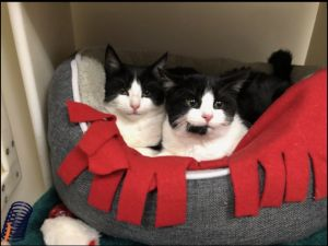 Photo of Sage and Pumpkin