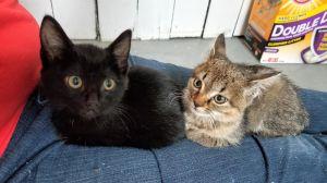 Archie & Calliope