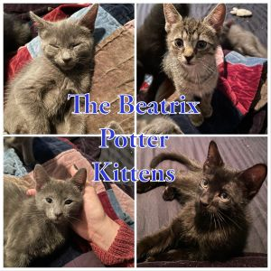 Mama Beatrix had 4 gorgeous and sweet kittens  2 boys and 2 girls Squirrel Nutkin and Miss Moppet