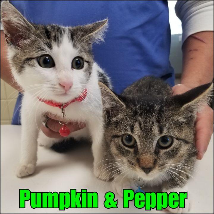Pumpkin & Pepper 1