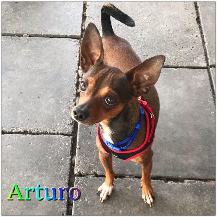 Arturo 1
