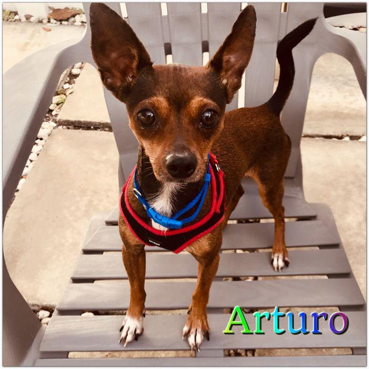 Arturo 2