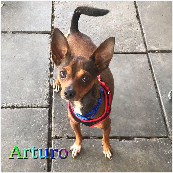 Arturo 3